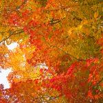 京都西京区大原野神社紅葉夜間ライトアップ「光と水」11月17日・18日
