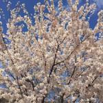 【京都結婚物語】 婚活イベント 「大人の婚活~蔵婚春~」終了いたしました!!